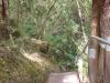 Много гъста дъждовна гора