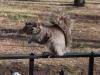 Катеричка в Battery Park