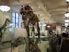 Природонаучният музей