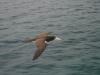 Карибска птица