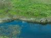 Алигатор и костенурки